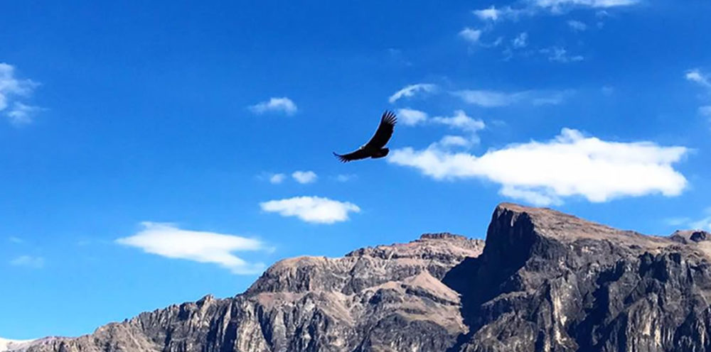 colca-canyon-2-day-tour-from-puno