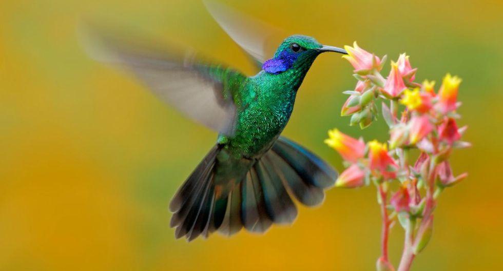 Peru is The Best Birdwatching Destination in The World
