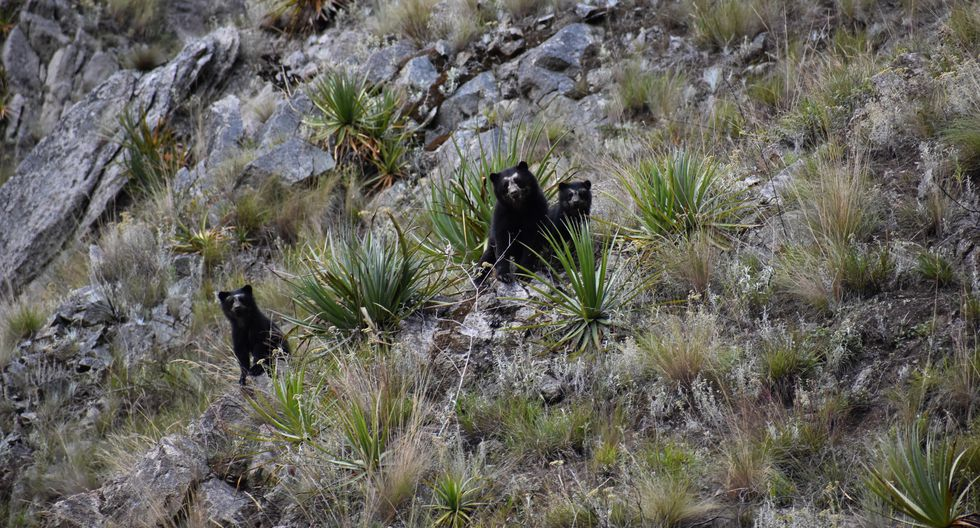 Increased Presence of wild Animals Outsid of  Protected Areas
